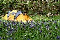 dinas-camping.jpg