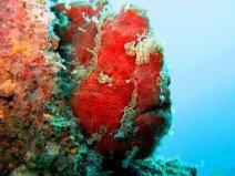 duiken-thailand.jpg